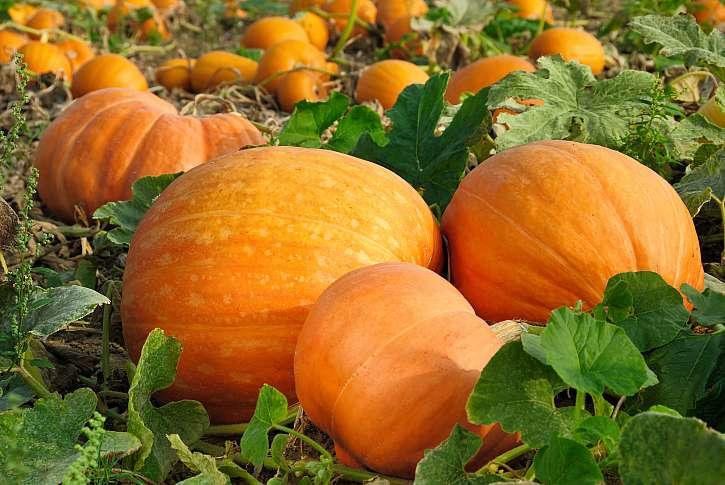 Pečená dýně v podzimním salátu (Zdroj: Depositphotos (https://cz.depositphotos.com))