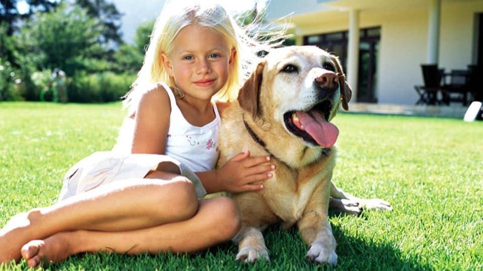 Jak můžeme ochránit svého psa před komáry?
