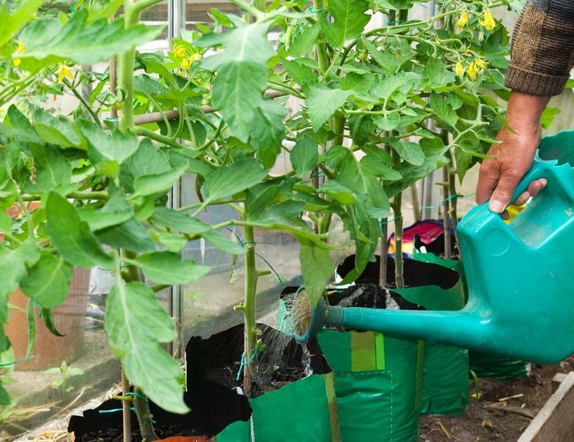Vypěstujte si BIO zeleninu – třeba na balkoně