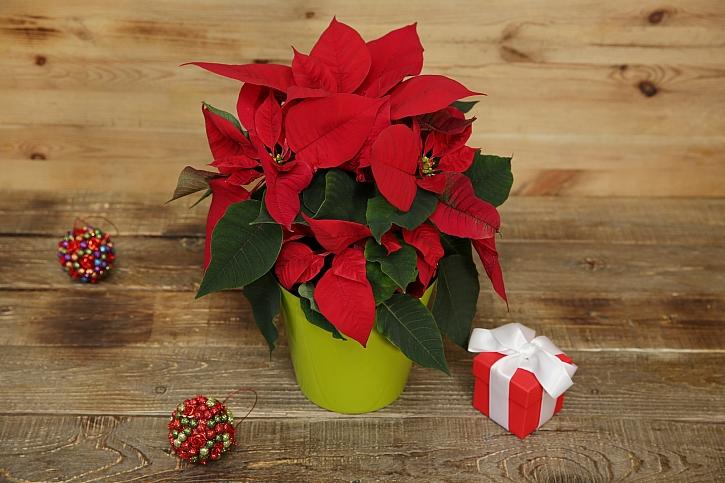 Nechte vánoční hvězdy zářit (Zdroj: Depositphotos)