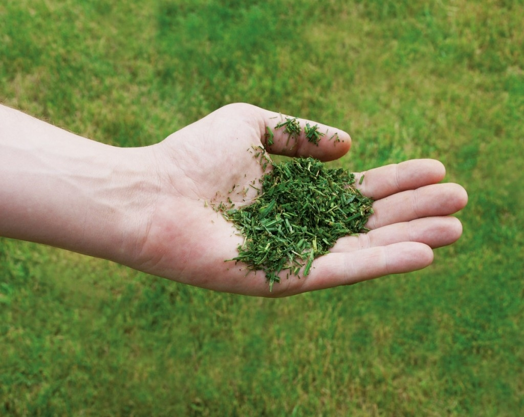 Jak obnovit trávník a vrátit ho zpět do formy