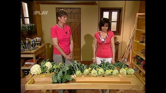 Nové rané odrůdy kedluben