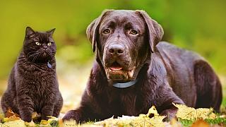 Jak ochránit psa a kočku před škrkavkami a spol.: Na první pohled vidět nejsou, ale o to větší hrozbou jsou