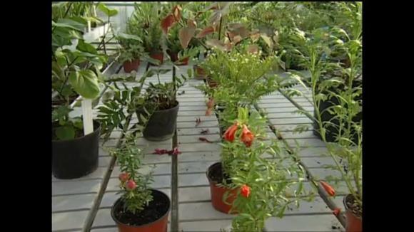 Ošetření pokojových rostlin při stěhování ze zahrady