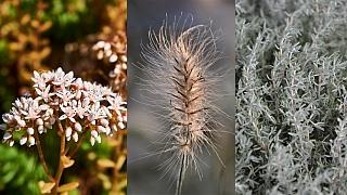 Jarní sestřih polokeřů, travin a trvalek