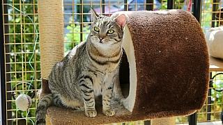 Kočky SOS: Víte, jak poskytnout první pomoc zatoulané kočce?
