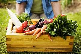 Víte, jak vybudovat vysoký záhon abyste sklízeli jen bohatou úrodu?