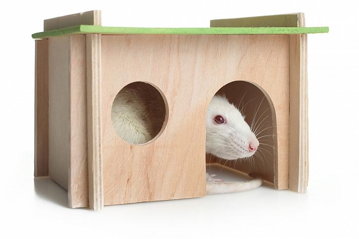 Myší domeček