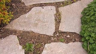 Čím a jak osázet zahradní chodníčky z nášlapných kamenů