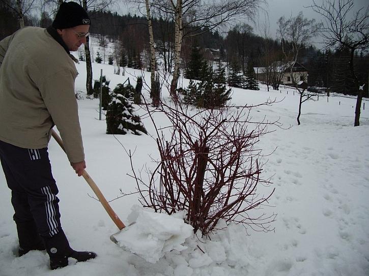 Přihrneme-li sníh k patám keřů a stromů, zajistíme jim dostatek vláhy