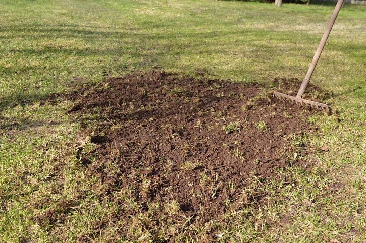 Obnova trávníku krok za krokem