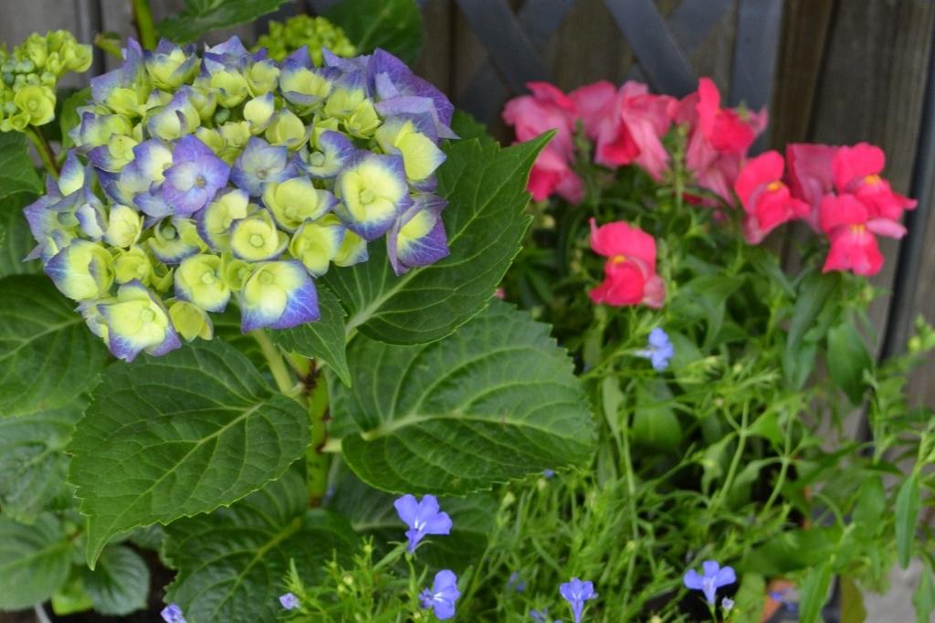 Jak pěstovat na balkoně květiny, ikdyž se vám vtom alergie snaží zabránit