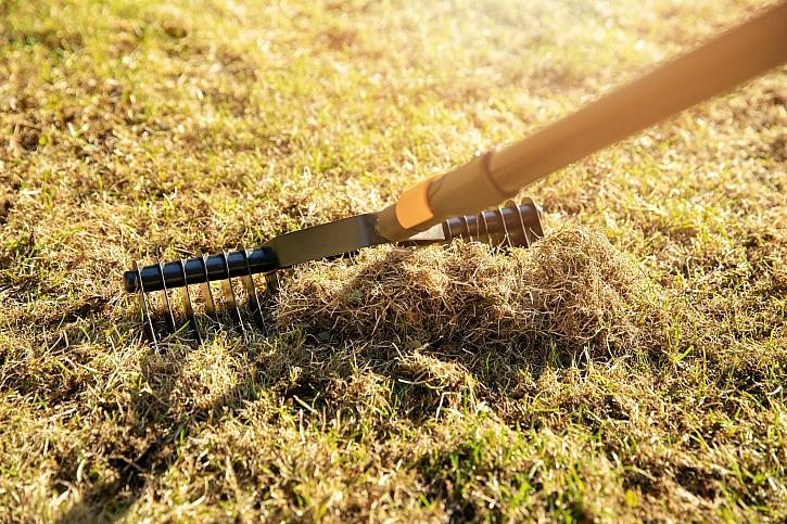 Hrabání staré trávy