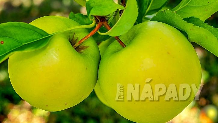 Předpověď počasí a zahrada: sklízí se zimní odrůdy jablek