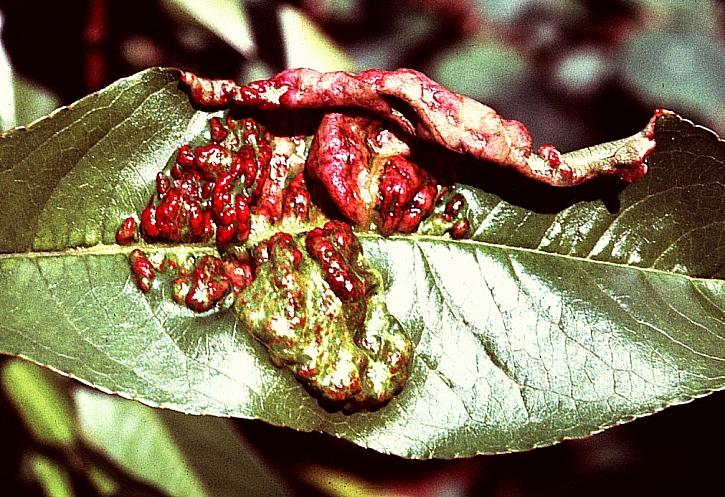 Co jsou fungicidy a k čemu se používají?