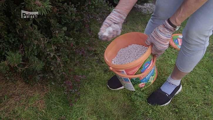 Hnojení vytrvalých rostlin a jehličnanů.