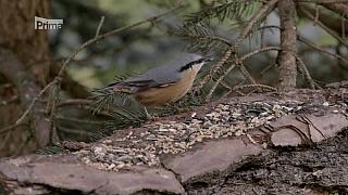 Krmení zpěvného ptactva