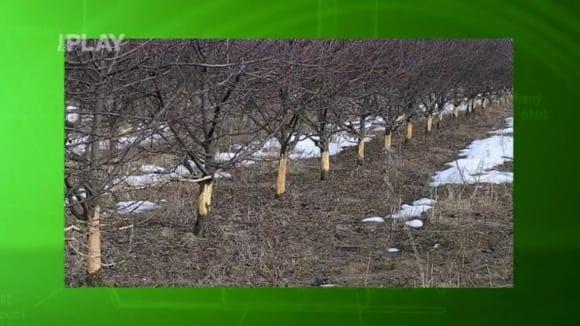 Ochrana stromků před okusem zvěří