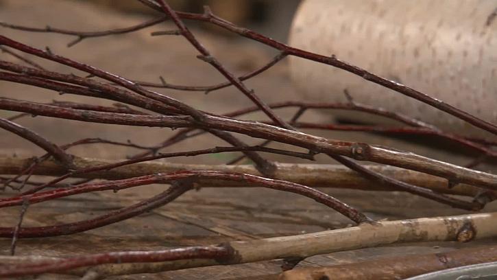 Přírodní větvě
