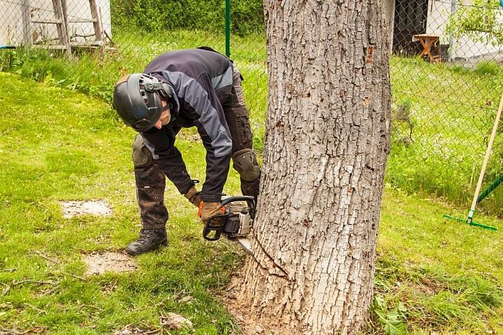 Profesionální kácení dřevin vyžaduje odborné znalosti
