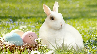 Velikonoční zajíc v hlavní roli: 11 prima nápadů na jarní dekorace