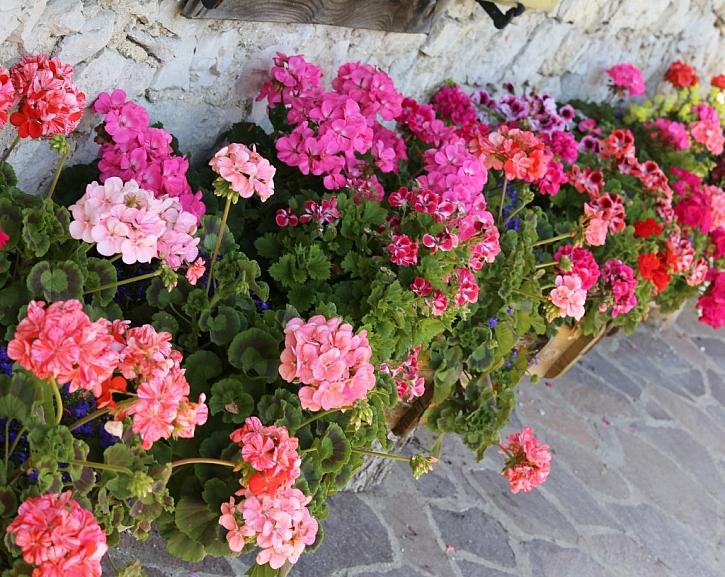 Kvalitní půda zajistí bohatou úrodu květů