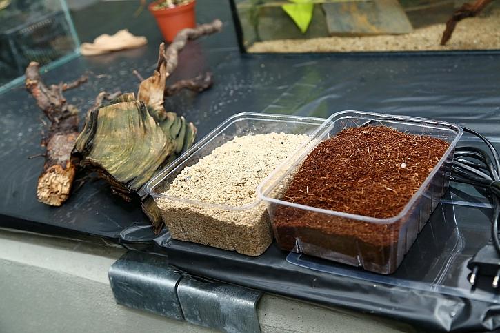 Používáme kokosový substrát, který se získává zoplodí kokosu