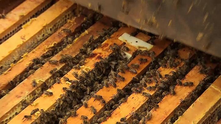 Zimní kontrola včelstev zahrnuje kontrolu včel i plástů (Zdroj: Prima Doma)