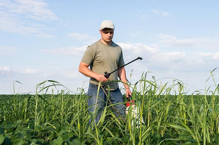 Proti plevelům bojujeme nejen postřikem (Zdroj: Depositphotos)