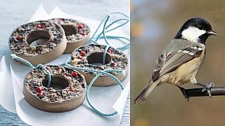 Věnečky s krmením pro ptáčky: Myslete na opeřené kamarády!