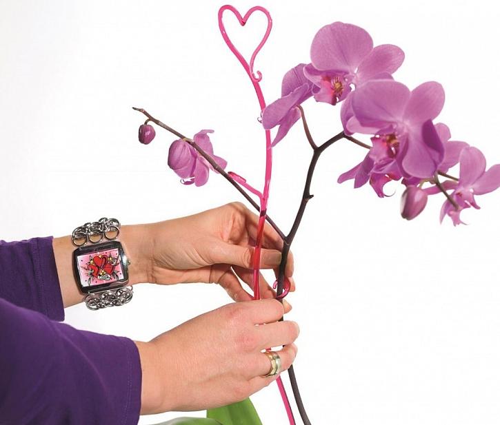 Rod Phalaenopsis (česky někdy nazývaný můrovec)