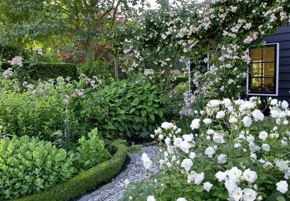 Tip: Moderní odrůdy růží kvetou oproti nostalgickým starším druhům vícekrát do roka, od června až do října.