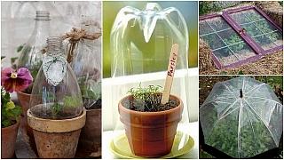Rychlení zeleniny a letniček: Netradiční fóliovníky a pařeniště