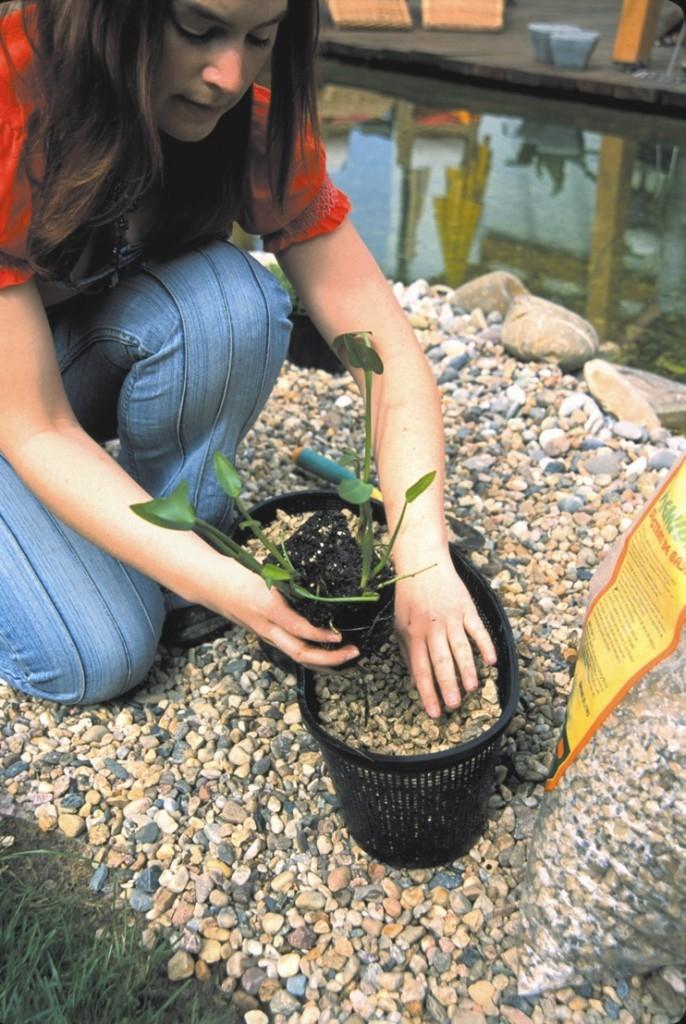 Rostliny v jezírku