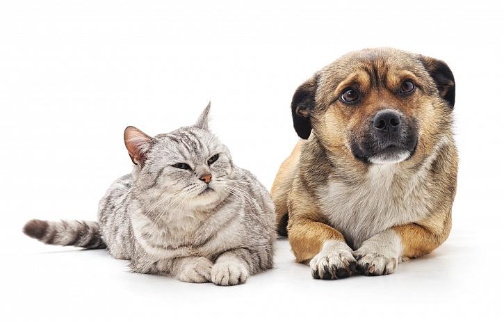 Pes a kočka si mohou způsobit nejrůznější úrazy i při hrách doma (Zdroj: Depositphotos)