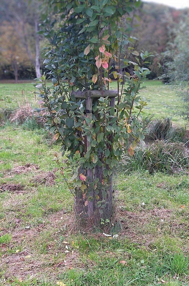 Ochrana stromku - pletivo