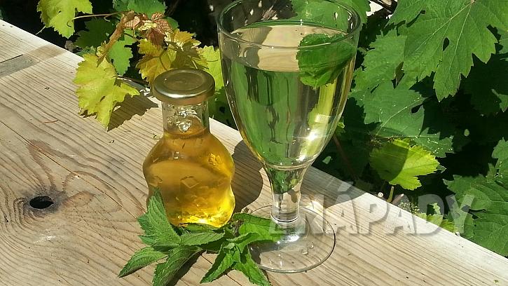 Domácí mátový sirup: ideální na ochucení nápojů nealkoholických i alkoholických