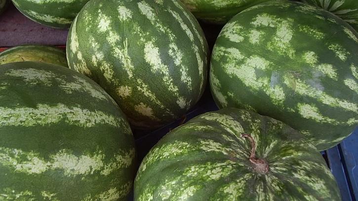 Vypěstujte si sladké melouny i u vás na zahradě