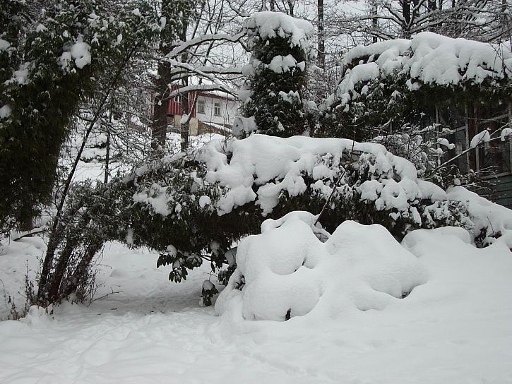 Mokrý a těžký sníh