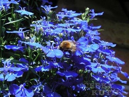 Zahrada plná alergií