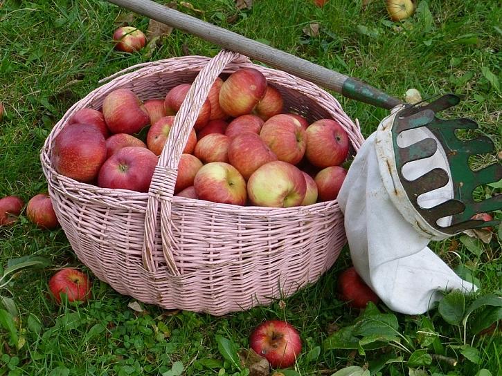 Podzimní zahrada – vyřezávané dýně a úroda