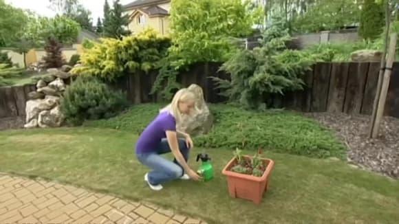Oživení balkónových rostlin