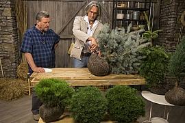 Výsadba dřevin má svá pravidla aneb Co vysazovat na podzim aco na jaře