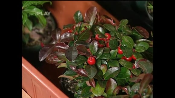 Pěstování okrasných rostlin (celoročně zelených) a bylinek