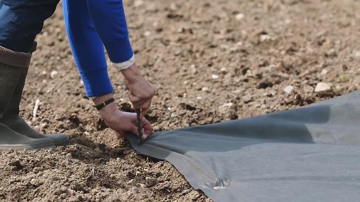 Jak pěstovat okurky na netkané textilii