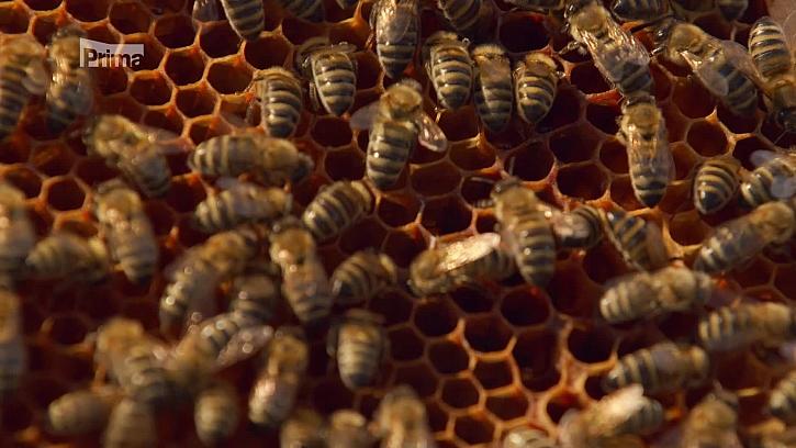 Chování včel
