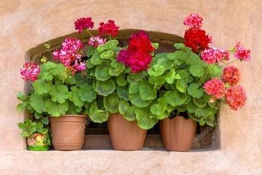 Přesazením a sestřihem připravíte balkonové rostliny na novou sezónu