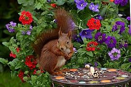 Zahrada plná života: Víte, kdo všechno žije na vaší zahradě?