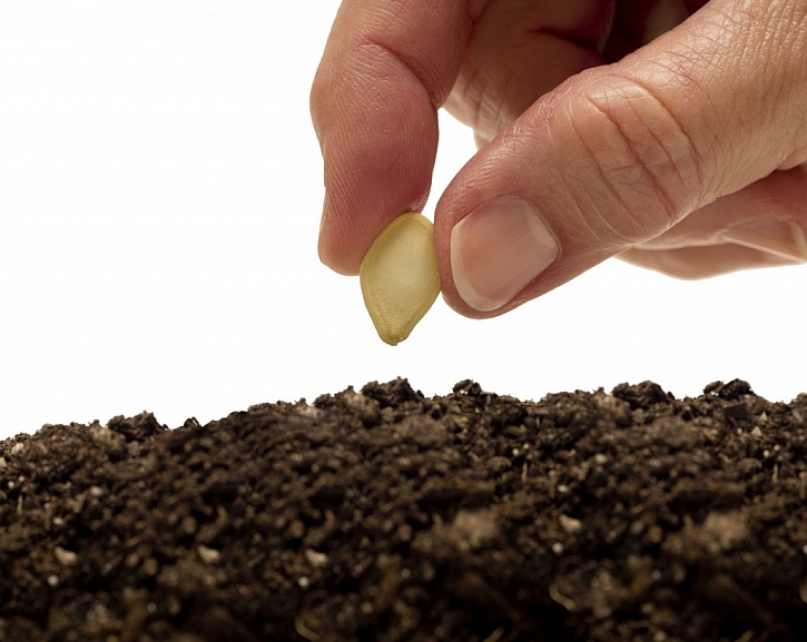 Nová moderní osiva a semena pro vaši zahradu (Zdroj: Depositphotos)