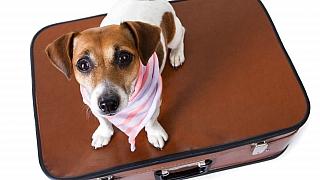 Vzít s sebou domácího mazlíčka na dovolenou, nebo mu raději zajistit hlídání?